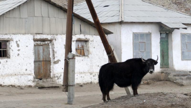 rural life2