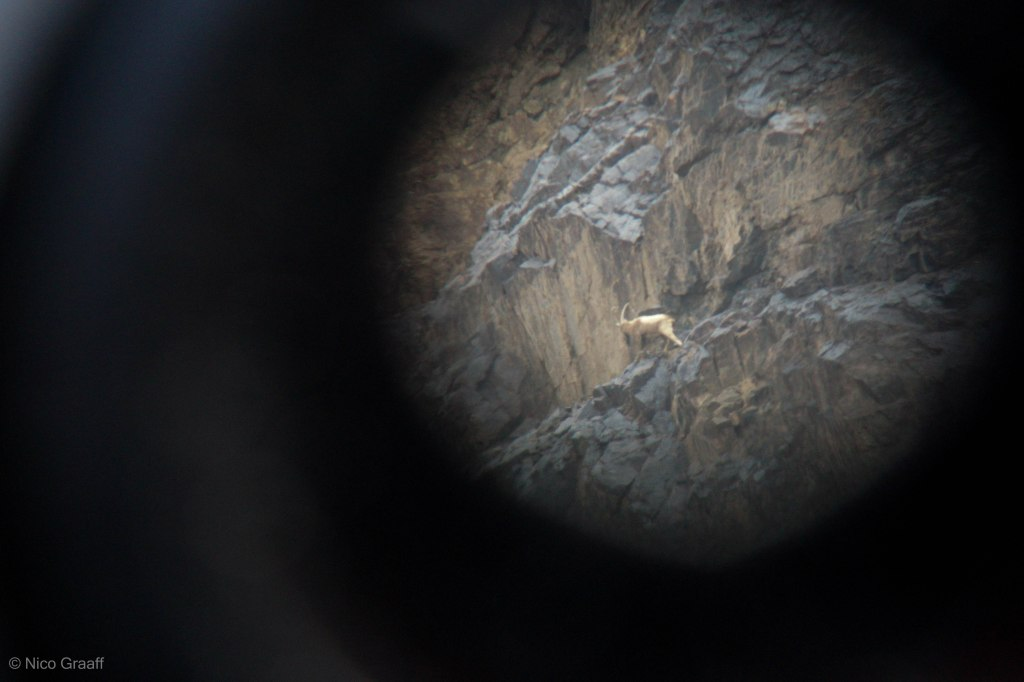 Ibex through Telescope